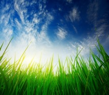 Grass_Sky_Light-215