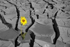 Flower in Cracked Earth-230