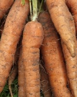 Carrots_unwashed-200